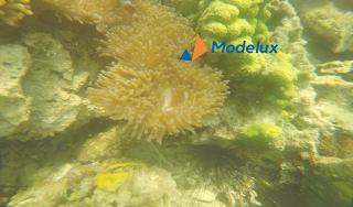 Snorkeling di pulau labun Batam