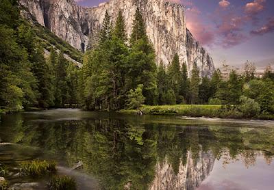 Bosque arboles reflejados en el agua