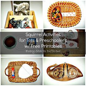 Squirrel activities