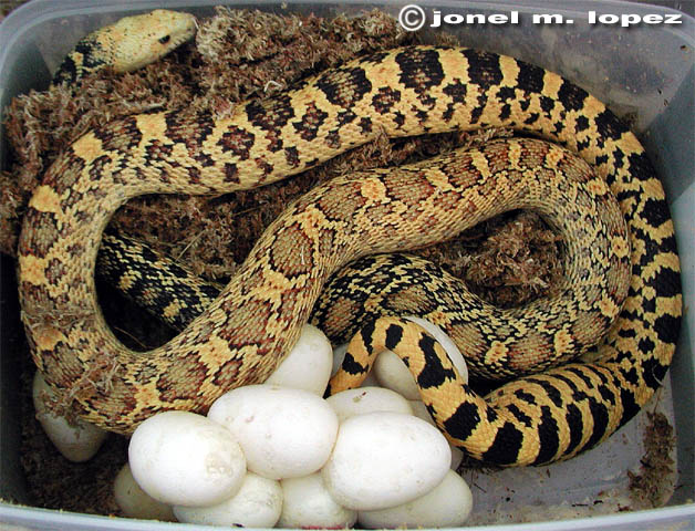 egg laying animals with name - photo #6