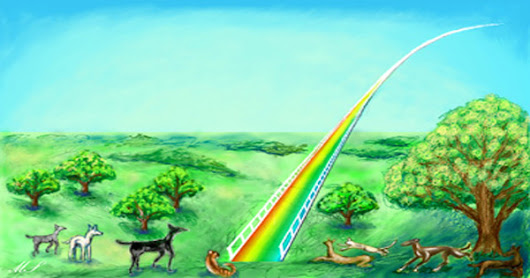 Pet Death: A Rainbow Bridge to Nowhere