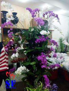 toko-bunga-surabaya-jual-bunga-anggrek-bulan