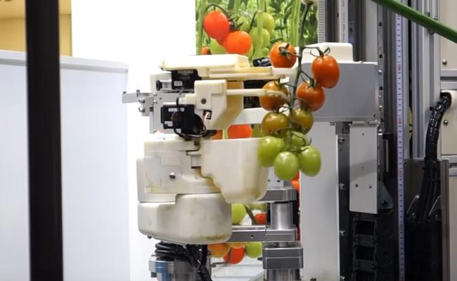 Tinuku Meet Panasonic's tomato-harvesting robot