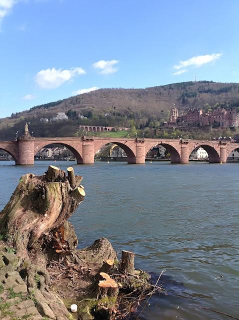 Spaziergang am Neckarufer mit Alter Brücke und Heidelberger Schloss im Hintergrund