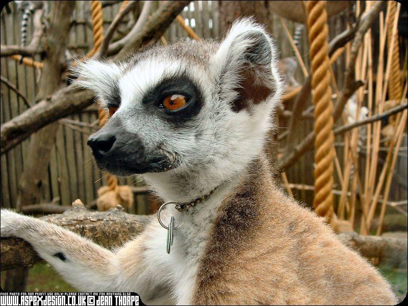 Animal Zoo Life: |Zoo animals pics|Zoo animals|Endangered ...