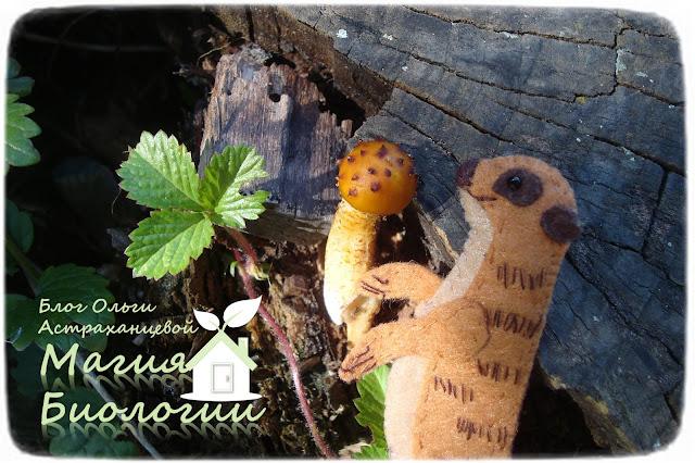 магия-биологии-осенние-игры-гриб-чешуйчатка-золотистая-сурикат-пальчиковая-игрушка