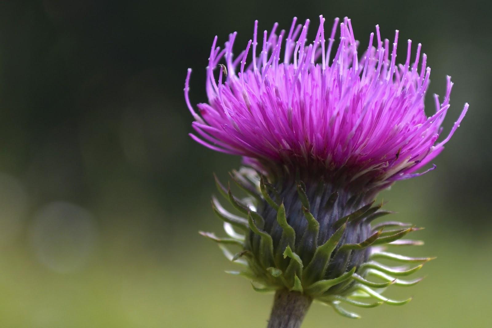 remedios herbales para el tratamiento del cáncer de próstata
