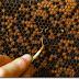 Arıları Hastalıklardan Koruma Yolları