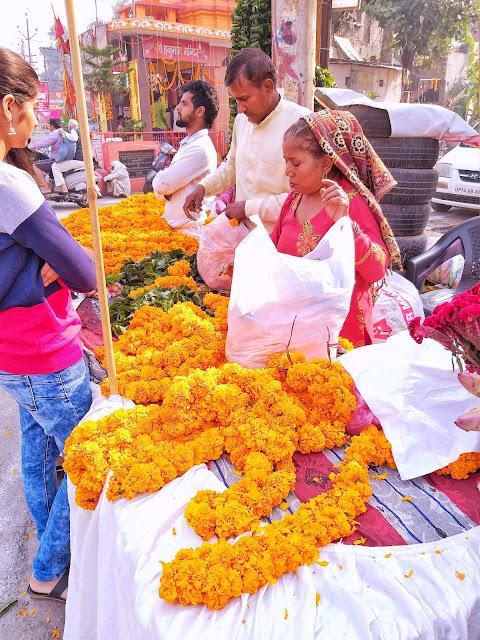flowers,marigold,muzaffarnagar.rural