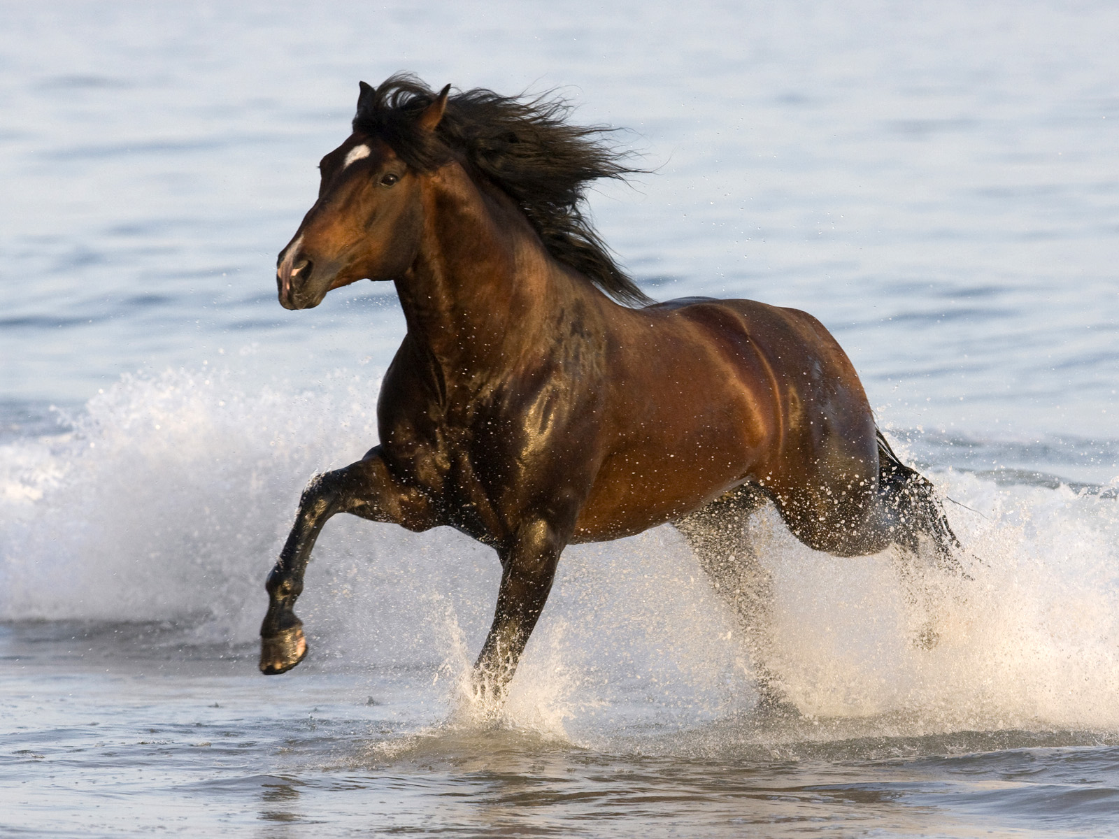 Wallpaper Gallery: Beautiful Horse Wallpaper