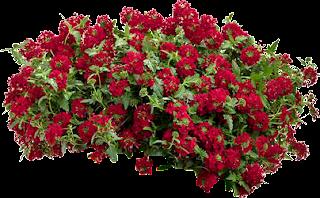 flores,grupo,arbustos,photoshop,png,recursos,arquitectura,graficos,follaje