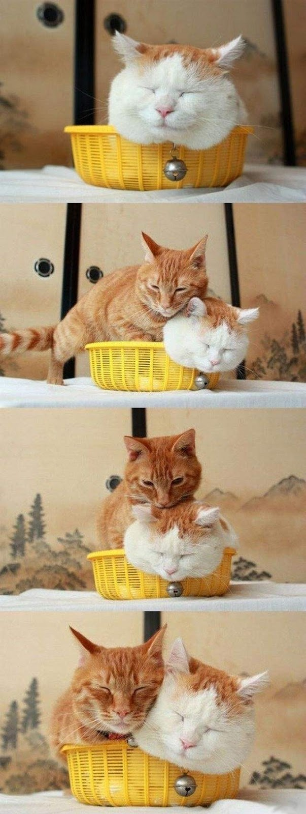 Funny cats - part 270, cute cat images, best funny cat, cats
