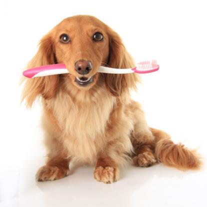 Bệnh viêm miệng ở chó