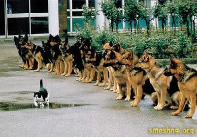 Когато маца командва!