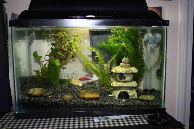 Bentuk Aquarium dengan Model Sederhana