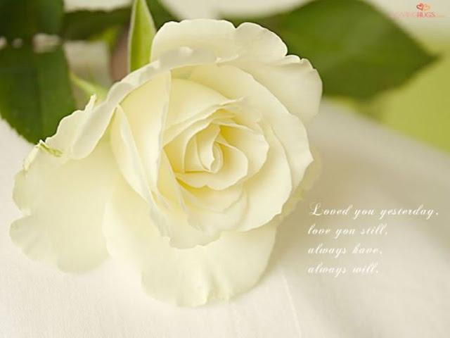 ý nghĩa hoa hồng trắng 1