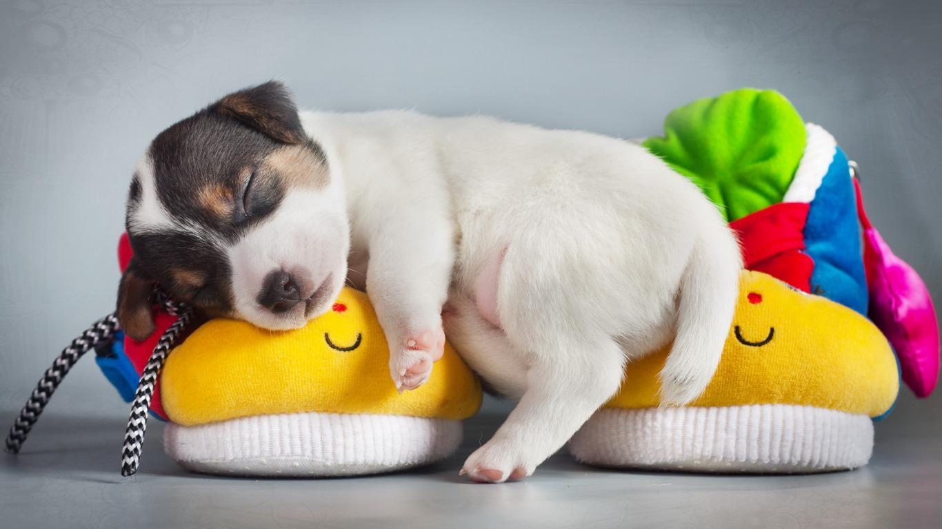 Hình chó con dễ thương nhất quả đất, ngủ gật lúc nào không hay, chú chó con này thật biết lựa chọn cho mình một chỗ ngủ thật tuyệt vời!