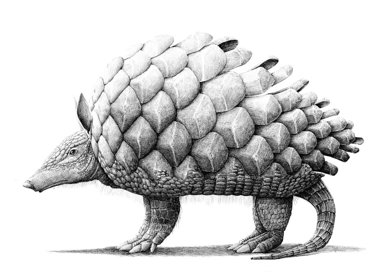 04-Pinecone-Armadillo-Redmer-Hoekstra-Surreal-Animal-Drawings-Pen-on-Paper-www-designstack-co