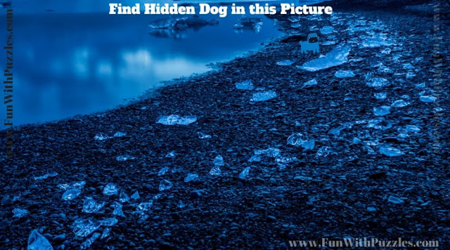 Picture Puzzle to find hidden dog to test your observational skills