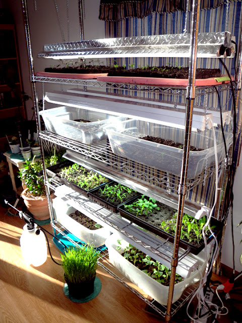 Can I Find A Grow Light And Seed Starter Kit Locally