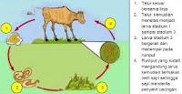 jenis-jenis penyakit yang biasa menyerang ternak kuda peliharaan