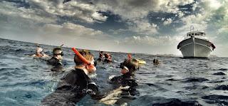 Snorkeling Tours In Sharm El Sheikh