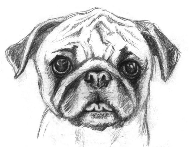 Image Of Bul Dog Puppy Coloring Pages