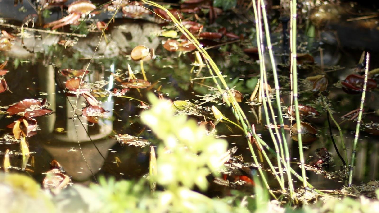 Teich in unserem Garten - mit Molchen, Fröschen, Fischen und Kröten