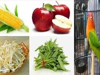 Daftar Makanan Agar Lovebird Ngekek Panjang