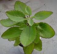 kidney(gurde) ki har bimari ka elaj in urdu