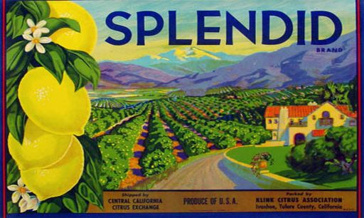 Graphic Vintage Fruit Advertisement Poster
