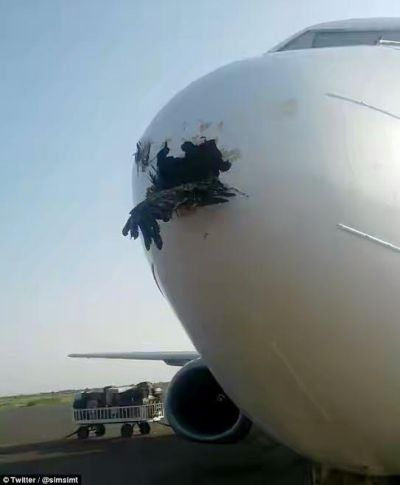 Bird is lodged in plane's nose cone after colliding with it as it came in to land