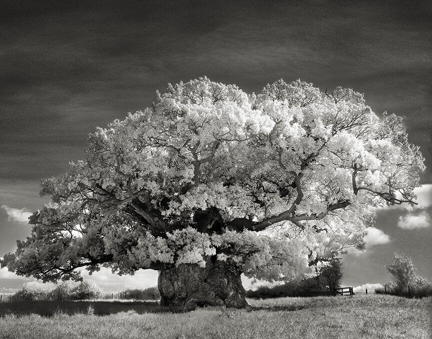 She Has Been Taking Pictures Of Trees For Fourteen Years... The Results Will Amaze You!