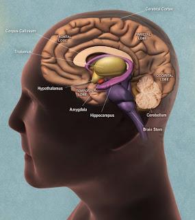 Ανθρώπινη Νευροφυσιολογία και Χειραγώγηση,εγκέφαλος, κοινωνία, νευροεπιστήμη, νευροφυσιολογία, νευρώνες, προπαγάνδα, συνείδηση, χειραγώγηση, Ψυχολογία
