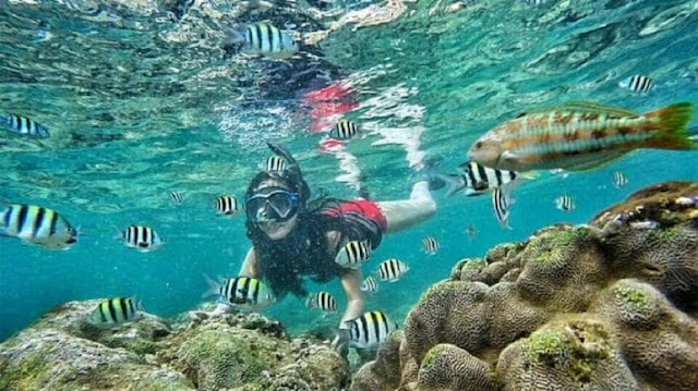Alam Bawah Laut Pantai Sadranan Gunung Kidul Yogyakarta
