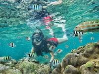 Keindahan Alam Bawah Laut Pantai Sadranan Gunung Kidul Yogyakarta