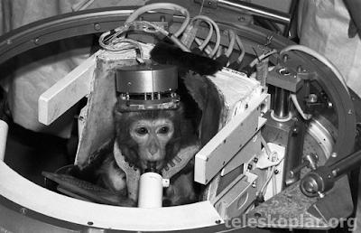 Uzaya gönderilen şempanze