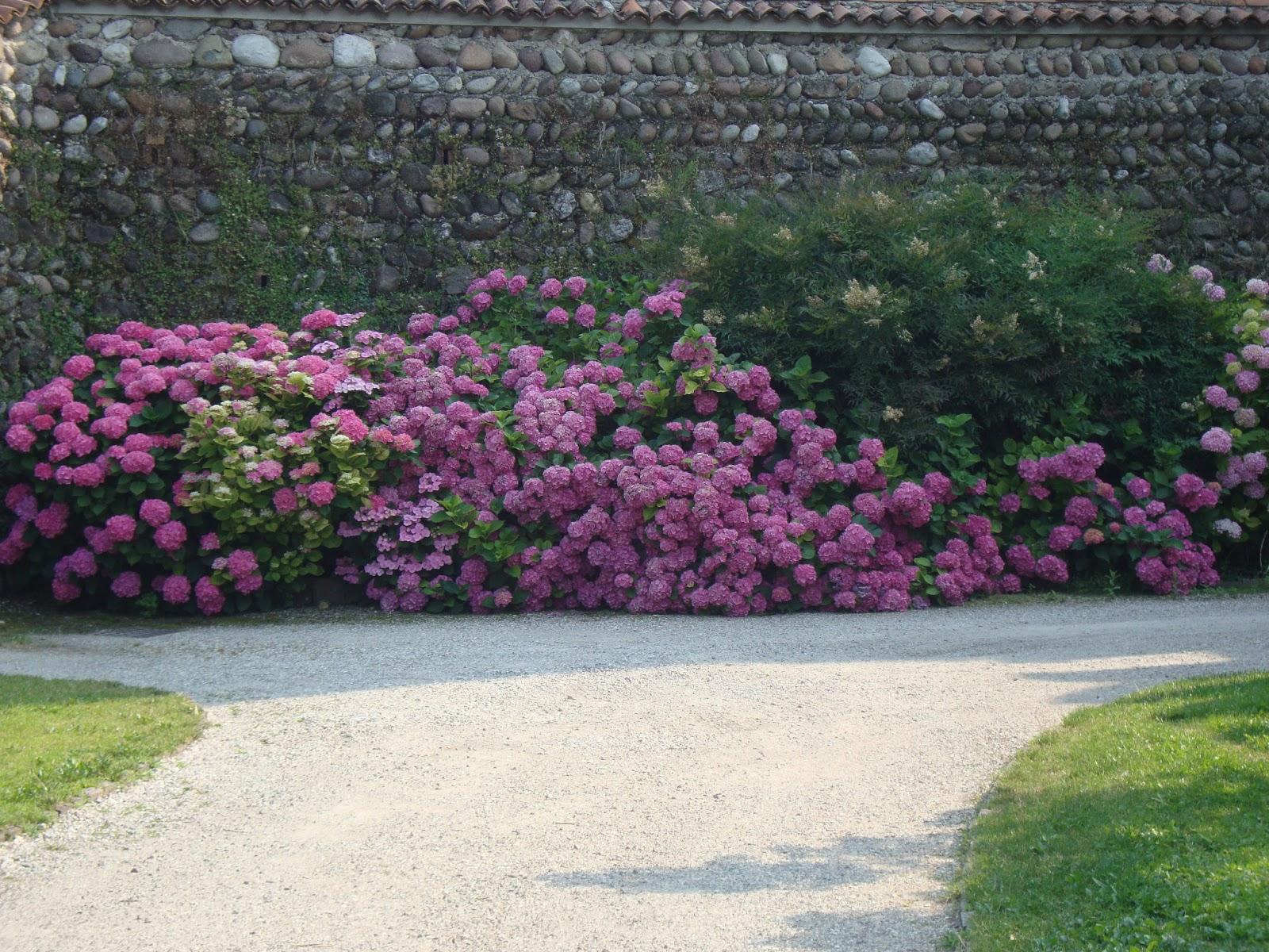 Un piccolo giardino in citt fioriture generose e for Foto di piccoli giardini