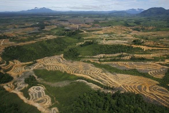 Walhi: Hutan Di Indonesia Telah Lama Digerus Industri