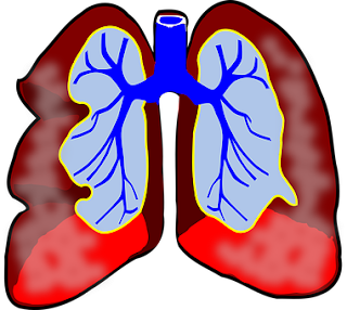 Effective Functions Of The Respiratory System