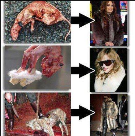 Animal Fashion Cruelty