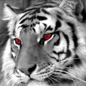Mustika Macan Putih