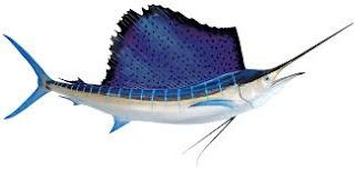 سمكة الزعنفة اسم السمكة الذي أطلق على PIXEL