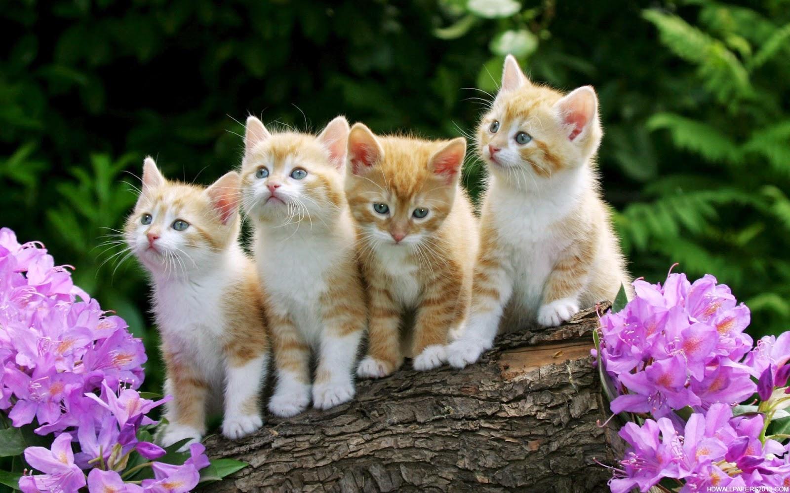 fef5363af689 Οι γάτες εμβολιάζονται κατά πέντε νοσημάτων (σύνδρομο ανώτερου  αναπνευστικού της γάτας