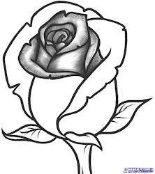 rose drawing draw flower easy beginners step pencil roses flowers drawings paintingvalley
