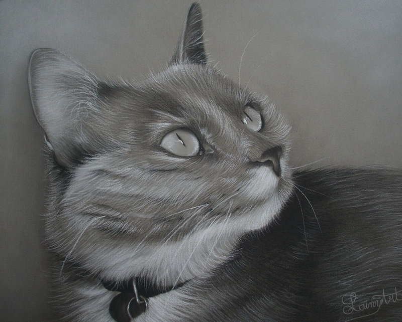 07-Javel-Alaina-Ferguson-Lainy-Animal-Charcoal-Portrait-Drawings-www-designstack-co