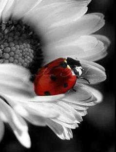 My Qalbi Hayati....: Kumbang dan Bunga