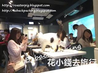 urbancafe貓