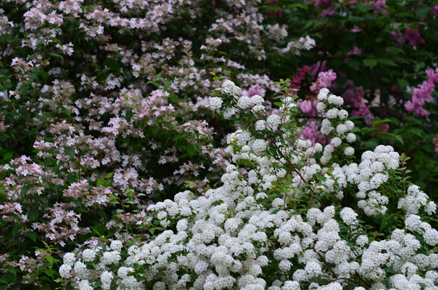 Early June Garden Fragrances Merge A Potpourri Of Pinks With