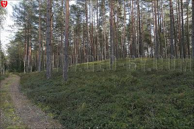 Налибокская пуща. Холм